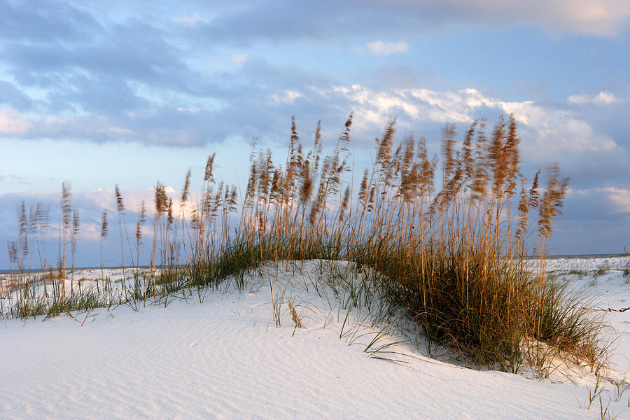 Alabama Photograph - Gulf Dunes by Eric Foltz