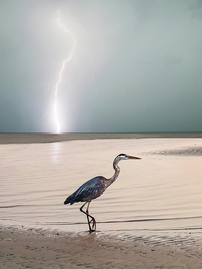 Lightning Photograph - Gulf Port Storm by Scott Cordell