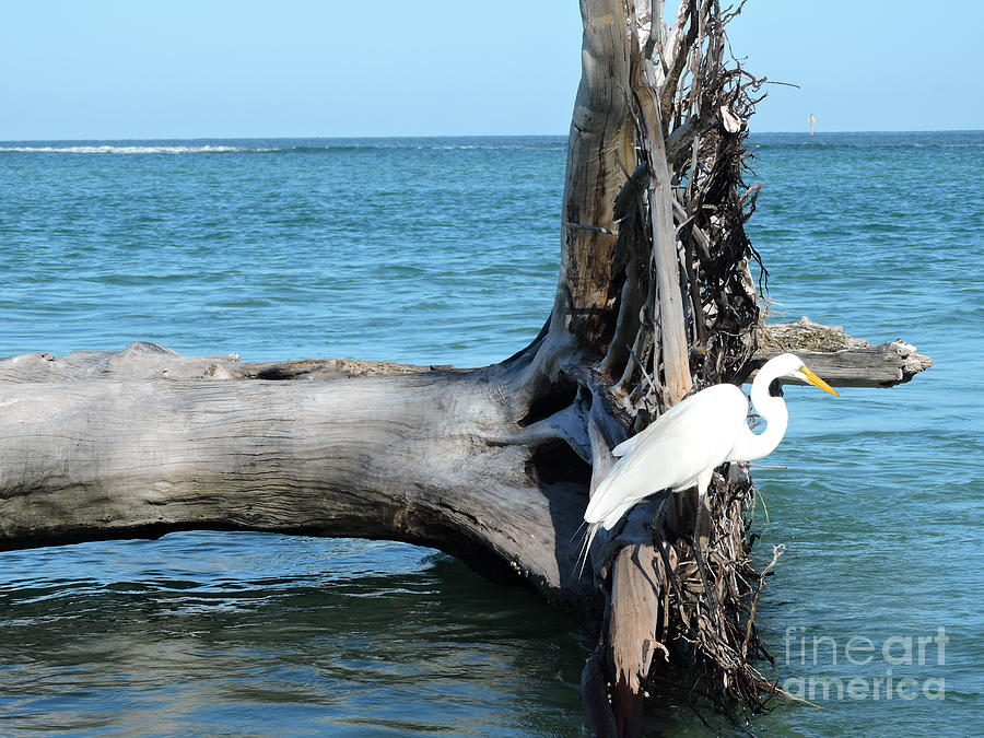 Blue Photograph - Gulf Shallows by Beth Williams