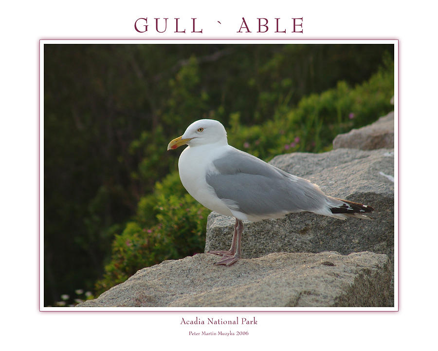 Landscape Photograph - Gull Able by Peter Muzyka
