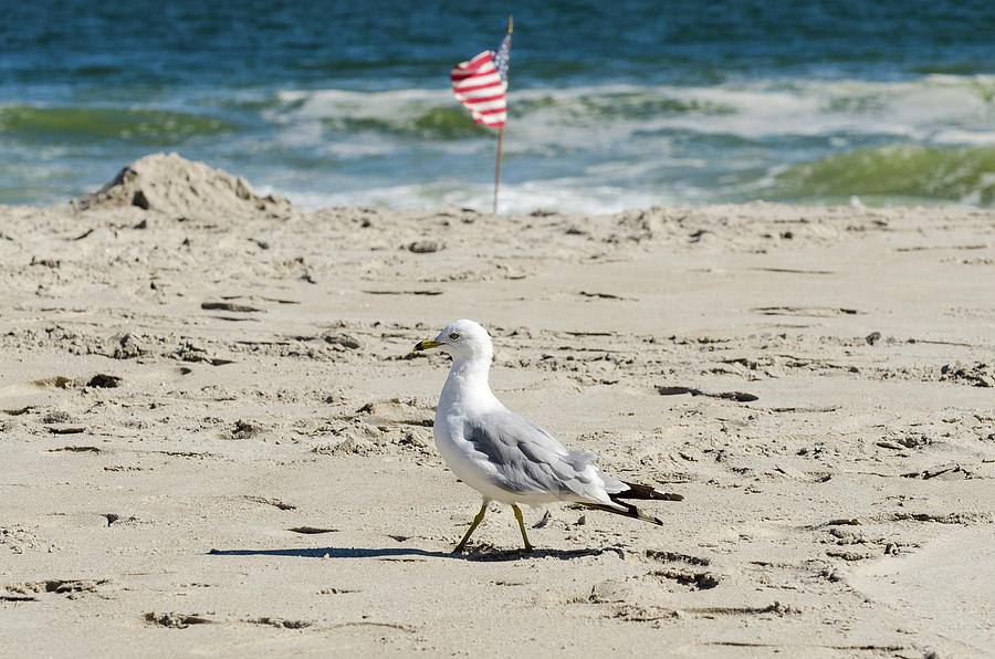 Gull and Flag Rockaway Beach by Maureen E Ritter