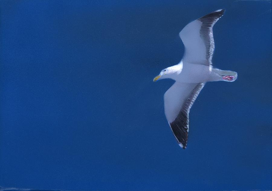 Gull Painting - Gull by Charles Parks