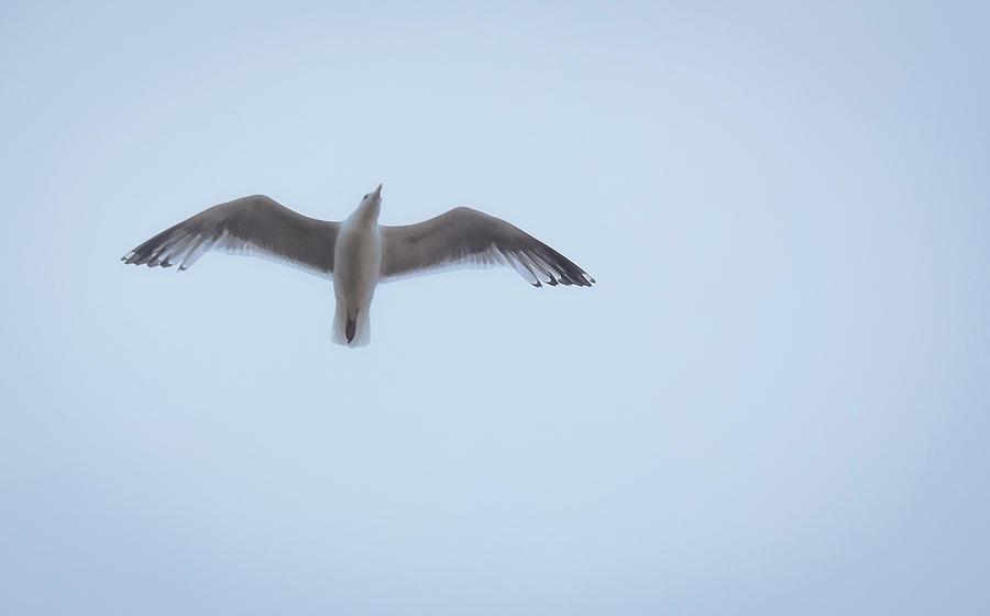 Gull Flight by Michael Friedman
