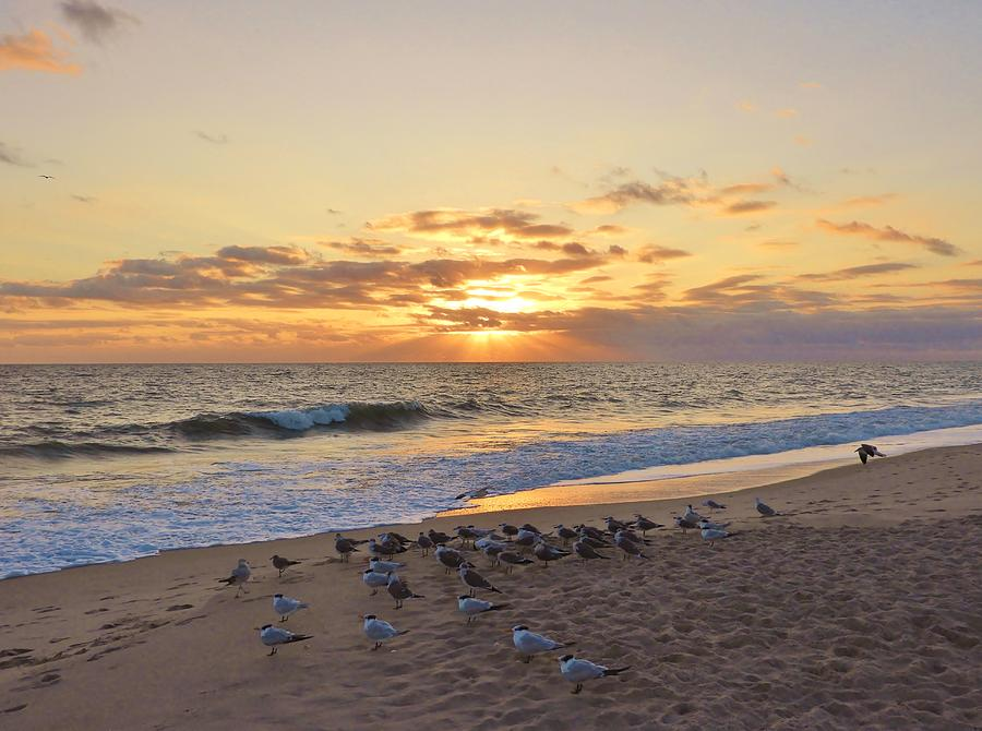 Sunrise Photograph - Gull Of A Sunrise by Red Cross