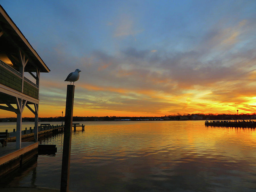 Island Heights Photograph - Gull Sunset by Linda Henne
