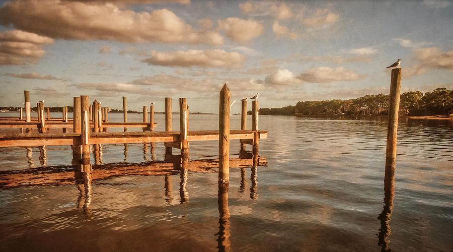 Sea Gulls Photograph - Gull Watching by Phillip Burrow