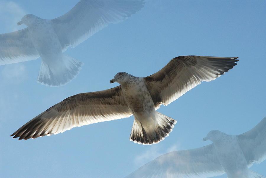 Seagulls Photograph - Gulls 41 by Joyce StJames