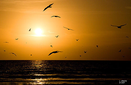 Gulls At Sunset Photograph by Lawrence Staats