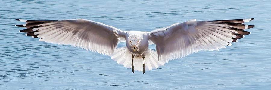 Gulls in Flight Series #1 of 7 by Kenneth F Konjevich