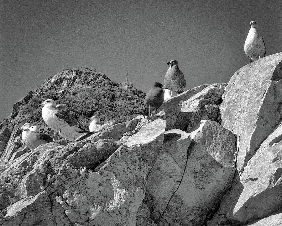 Gulls on Guard - Pt Mugu, California by Samuel M Purvis III