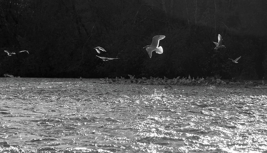 Gull Photograph - Gulls On The River by Trance Blackman