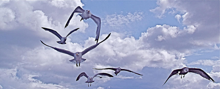 Gulls Photograph - Gulls Will Be Gulls by Mike Shepley DA Edin