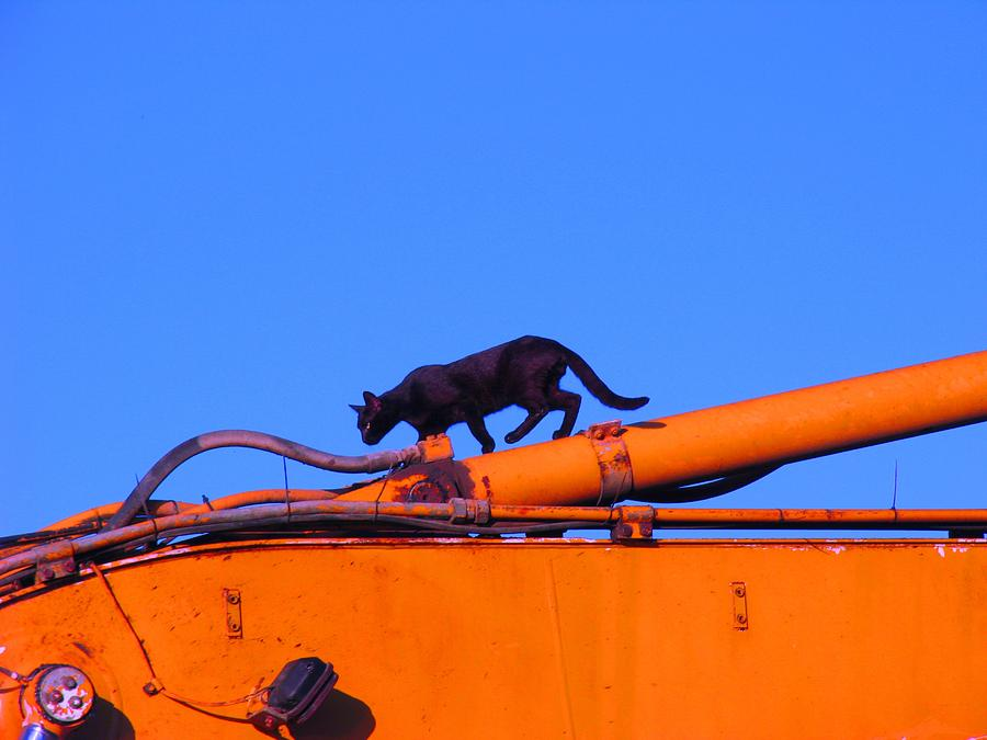 Gunther Gets on Top of Things by Anita Dale Livaditis
