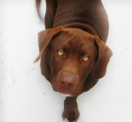 Dog Photograph - Gus by Heidi Berkovitz