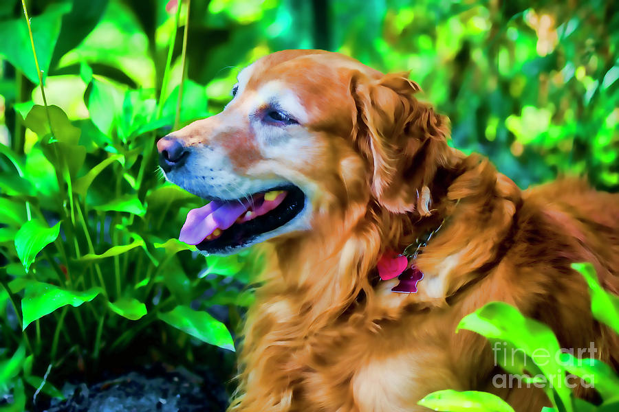 Gus Photograph - Gus In Flower Bed 10357t2a by Doug Berry