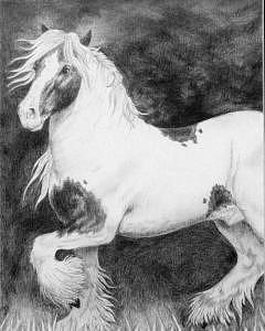Animal Painting - Gypsy Cob Pony by Jodi Bauter
