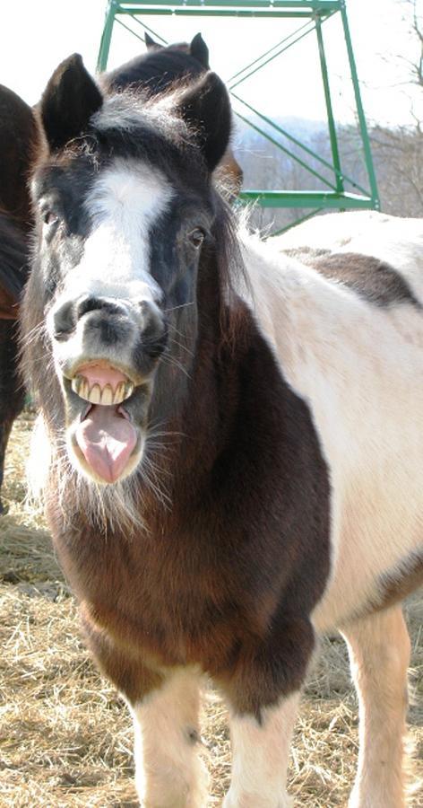 Horses Photograph - Ha Ha Got Ya by Linda Henriksen