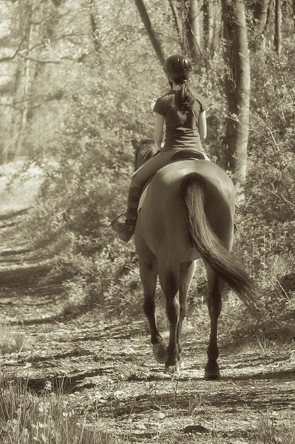Horse Photograph - Hacking  by JAMART Photography