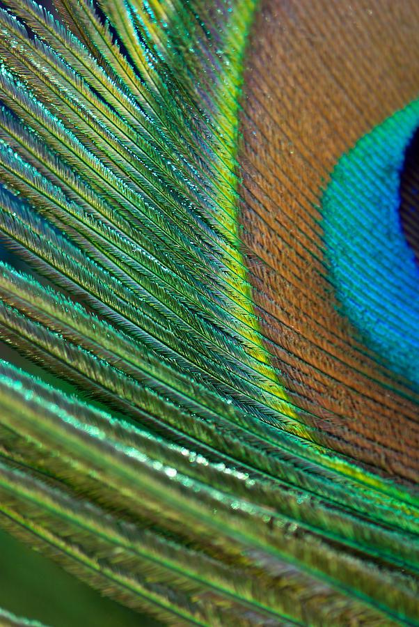 Interior Design Photograph - Half Cocked by Lisa Knechtel