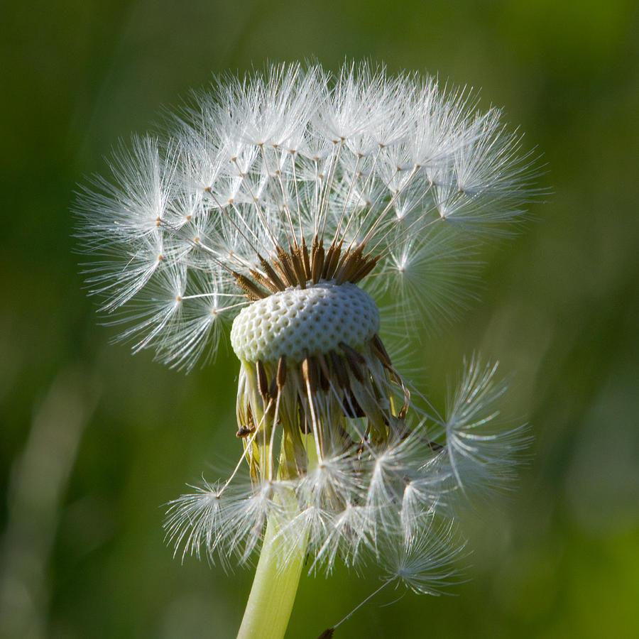 Plant Photograph - Half Gone by Carl Jackson