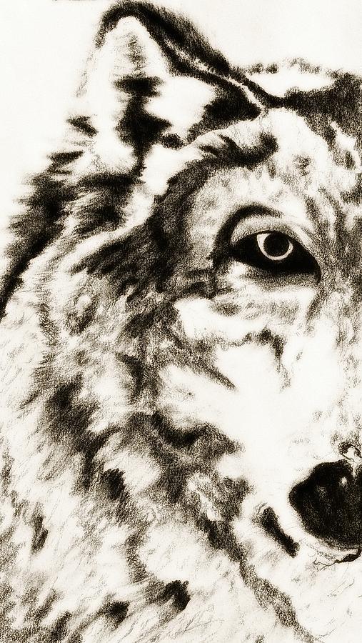 Pencil Drawing Of Half Wolf Face By Ayasha Loya Drawing
