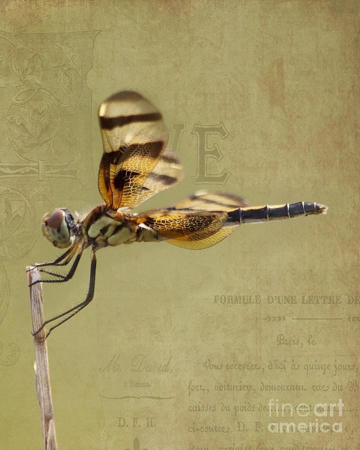 Dragonfly Photograph - Halloween Pennant Dragonfly by TN Fairey