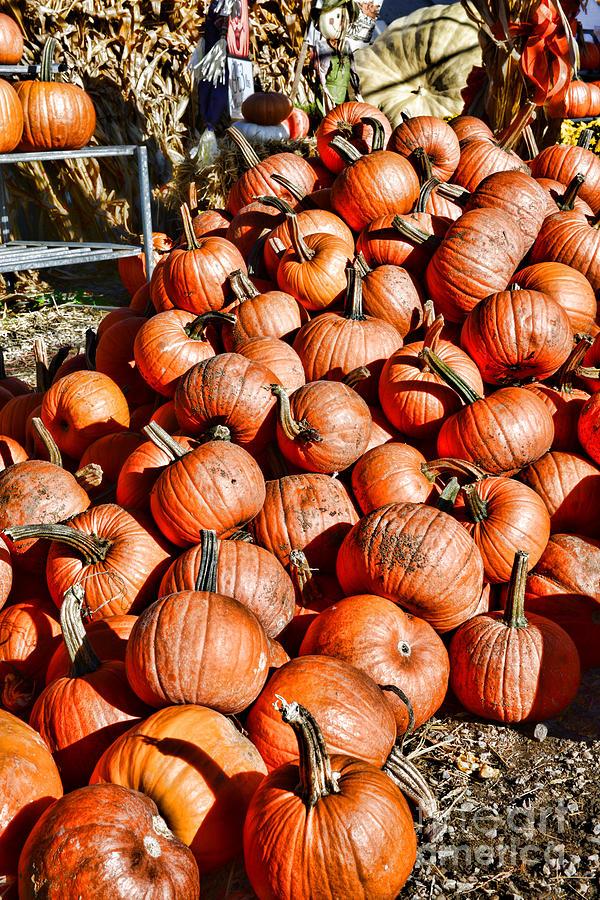 halloween pick a pumpkin photograph by paul ward