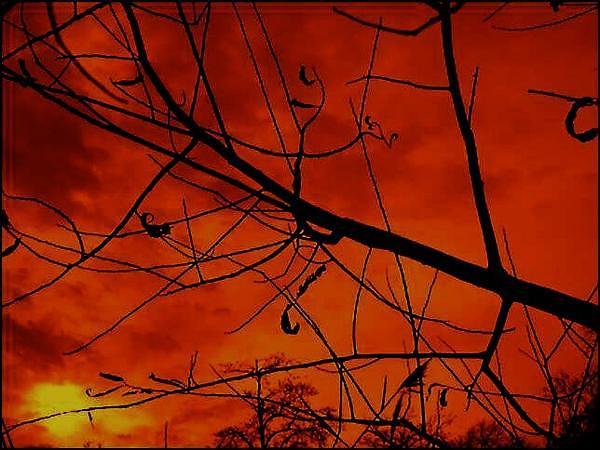 Branch Photograph - Halloween Sky by Chelsea Jones