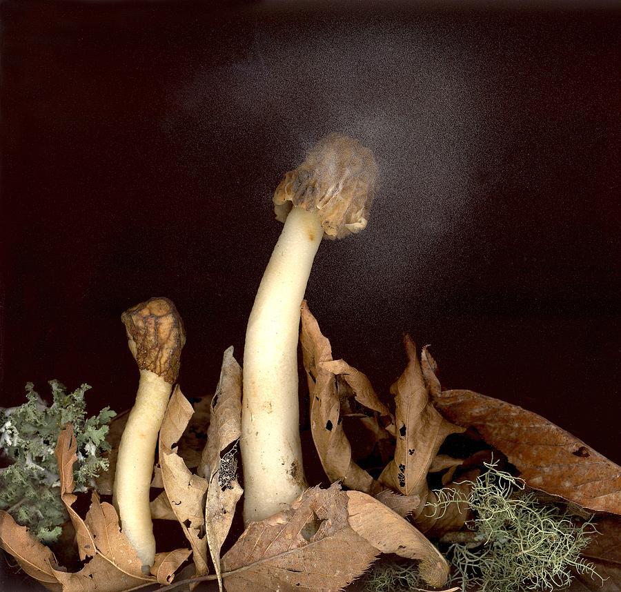 Mushrooms Photograph - Halo of Spores by Sandi F Hutchins