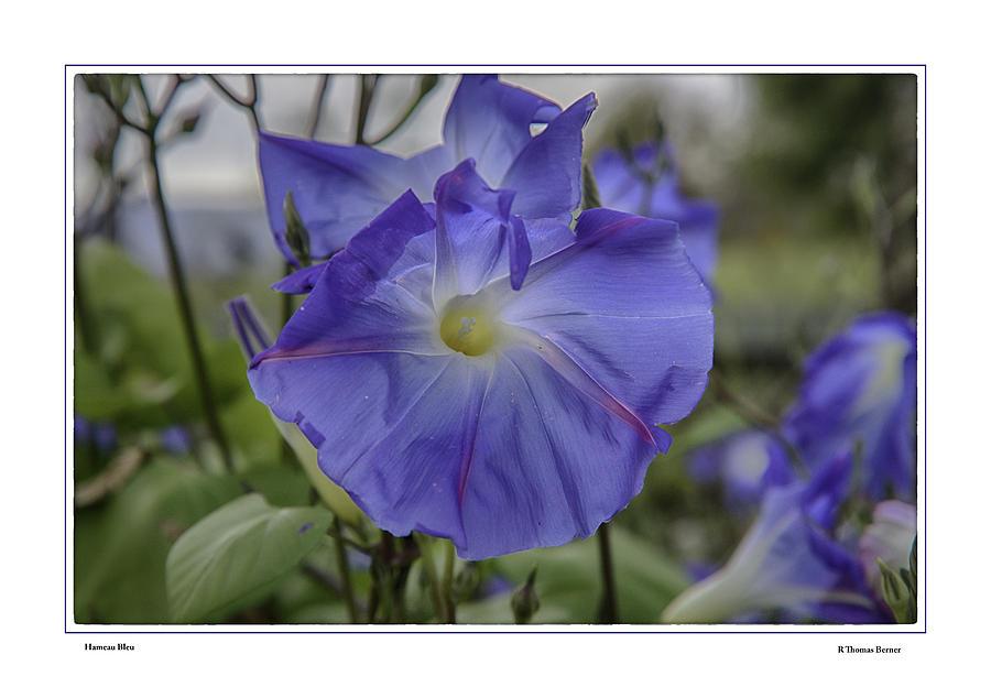 Hameau Bleu Photograph by R Thomas Berner