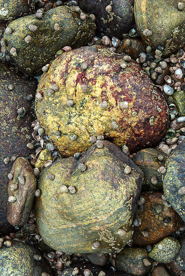 Hammonasset Photograph - Hammonasset Rocks by Clifford Pugliese