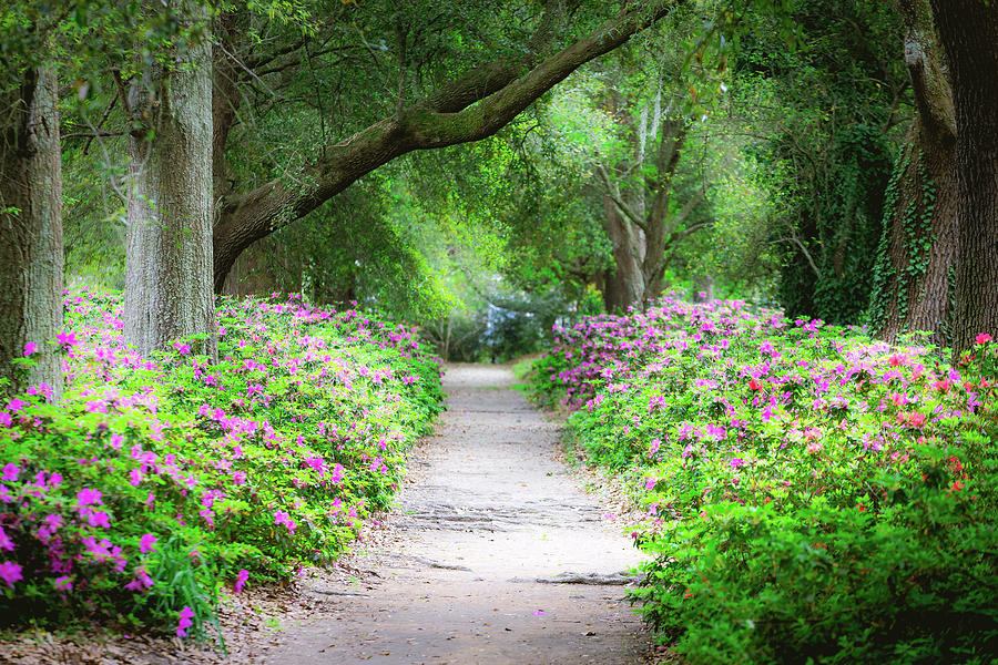 Hampton Park Photograph - Hampton Park Path by Joshua Corrigan