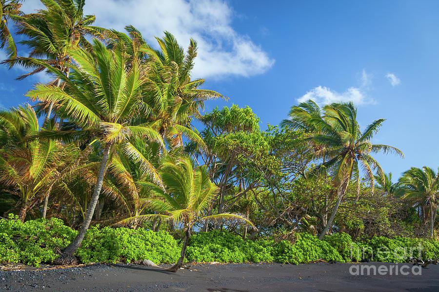 America Photograph - Hana Palm Tree Grove by Inge Johnsson