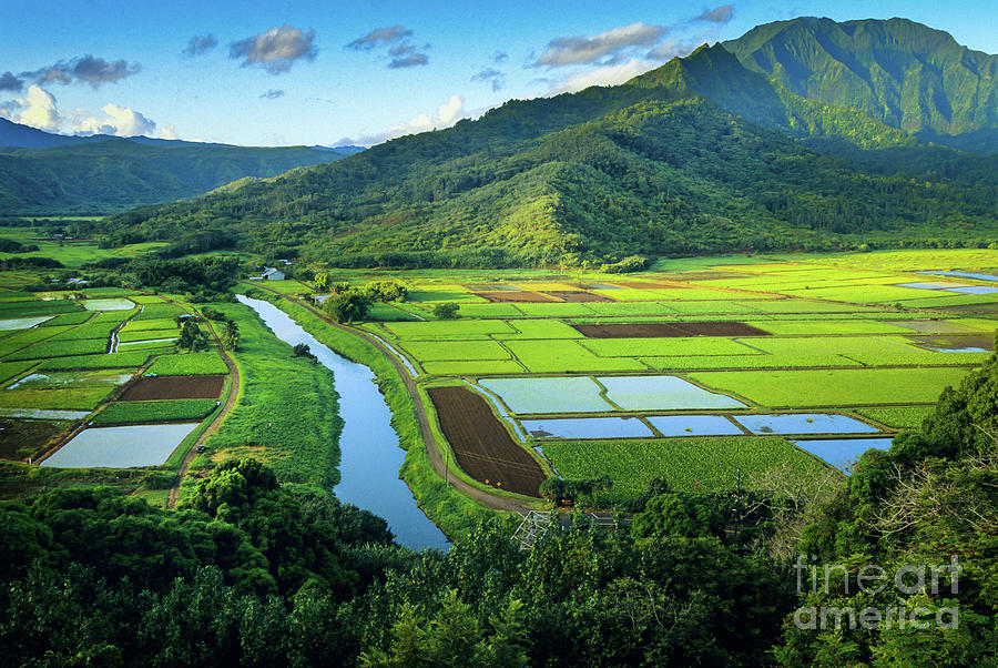 America Photograph - Hanalei Valley by Inge Johnsson