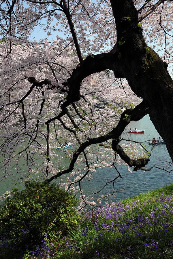 Landscape Photograph - Hanami  by Robin Street-Morris