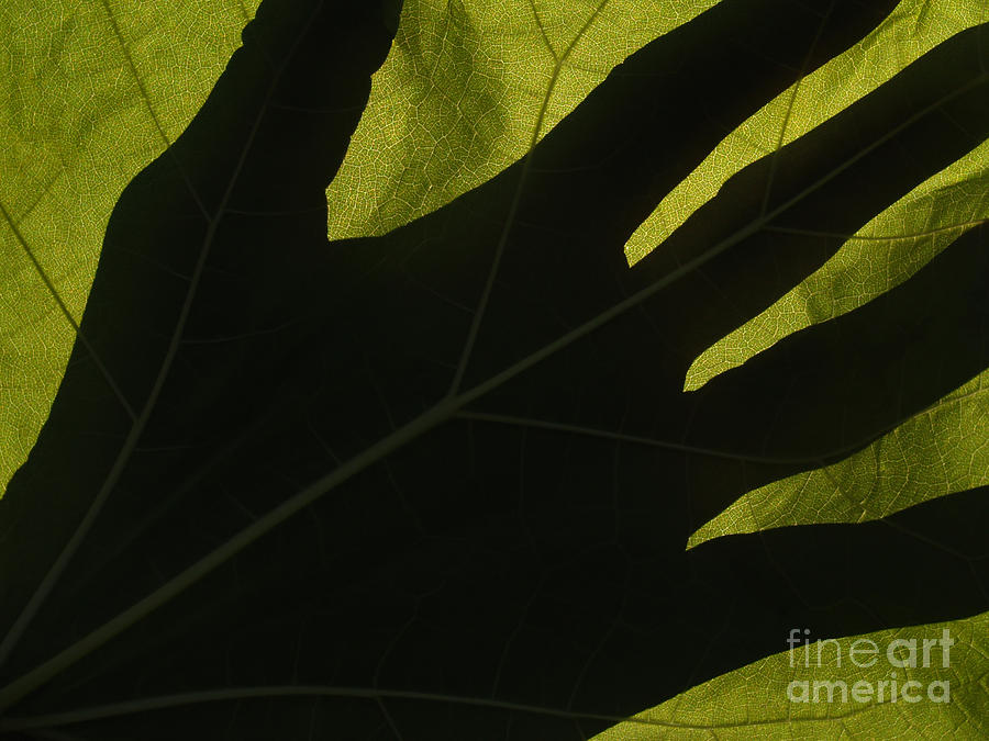 Hand Photograph - Hand And Catalpa Veins Backlit by Anna Lisa Yoder