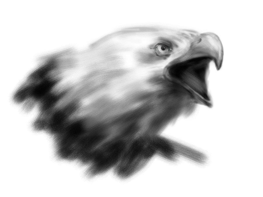 Hand Drawing Eagle Head Digital Illustration By Anton Kubalik