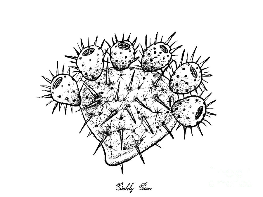 Hand Drawn Of Fresh Ripe Prickly Pears Drawing By Iam Nee