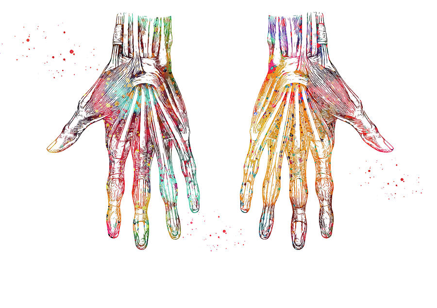Hand Muscles Digital Art By Erzebet S