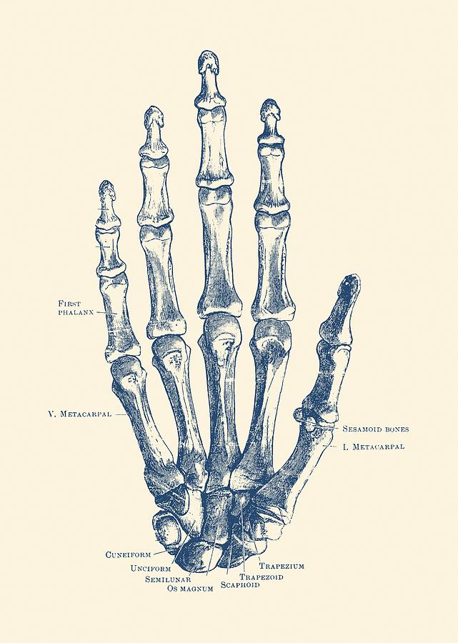 Surprising Hand Skeletal Diagram Vintage Anatomy Poster Drawing By War Is Wiring Cloud Tziciuggs Outletorg