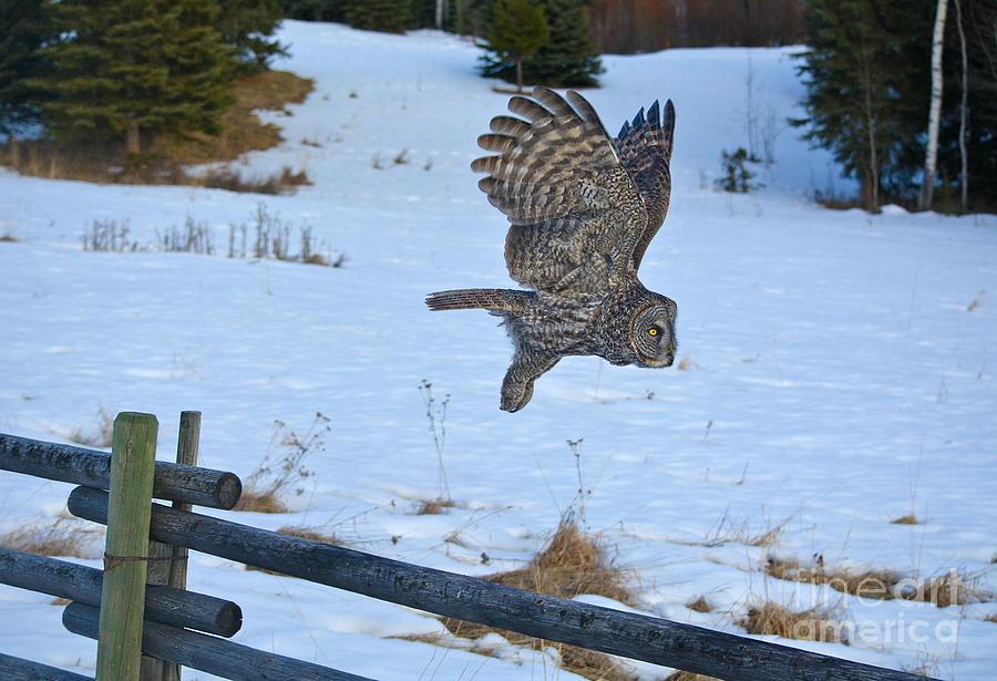 Owl Photograph - Hang Gliding by Skye Ryan-Evans