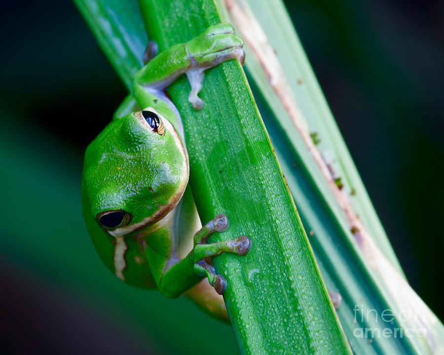 Amphibian Photograph - Hangin On by Steven Dillon
