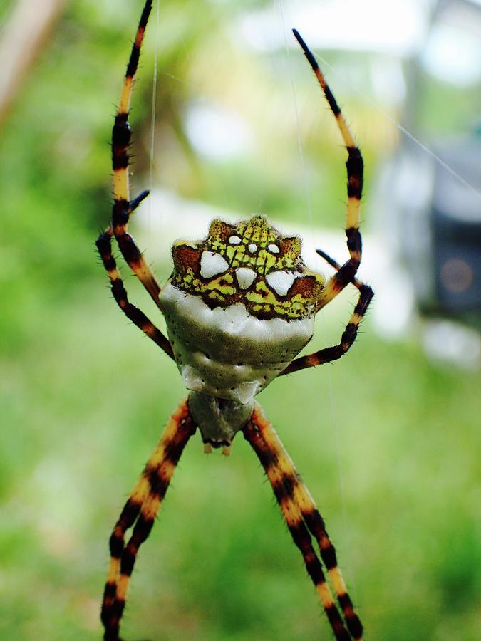 Eleuthera Photograph - Hanging Around by Lora Louise