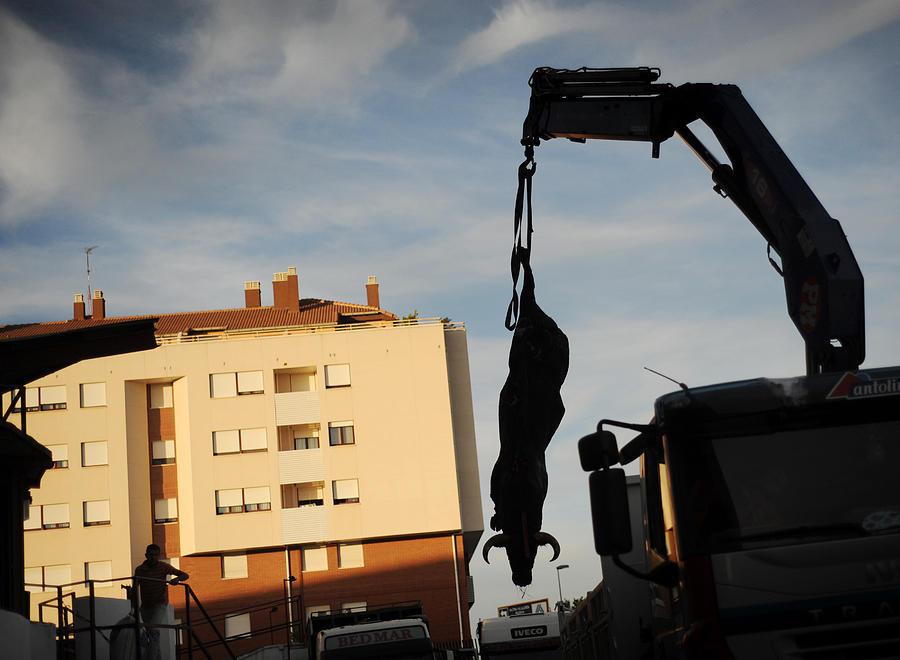Spain Photograph - Hanging Bull by Rafa Rivas