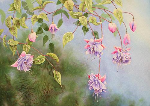 Fuchsias Painting - Hanging Fuchsias by Nancy Goldman