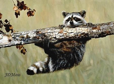 Critters Drawing - Hanging On by Janet Moss