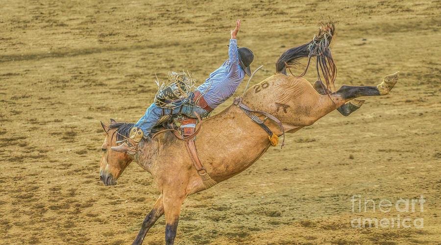 Bronco Busting Digital Art - Hanging On Rodeo Bronco Busting by Randy Steele
