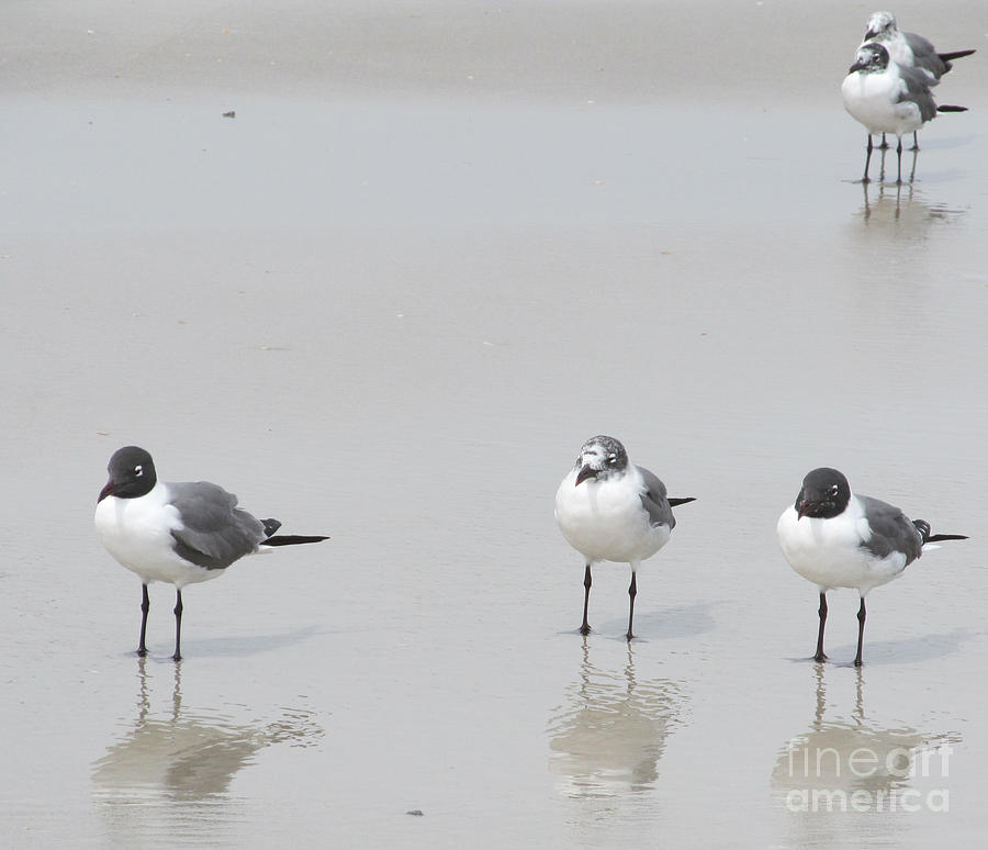 Acrylic Painting Photograph - Hanging Out At The Beach by Sharon Nelson-Bianco