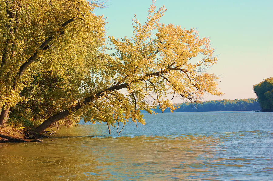 Tree Photograph - Hanging Out by Jame Hayes