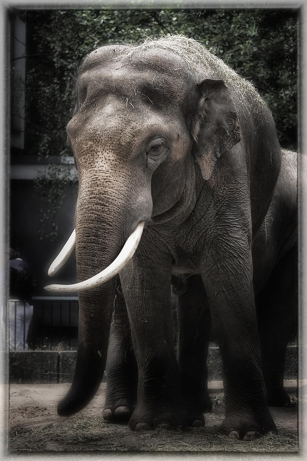 Elephant Photograph - Hanging Out by Joan Carroll
